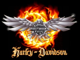 Martin Heřmanský promoted in Harley-Davidson